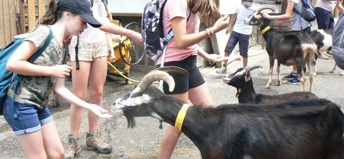 Jeudi, randonnée au village des chèvres !